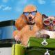 Brexit: les animaux britanniques seront soumis à de nouvelles règles pour voyager en Europe